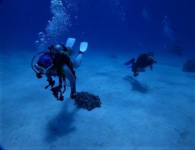 夏!! 八重山諸島 西表島「網取浅場」でダイビングをしました。