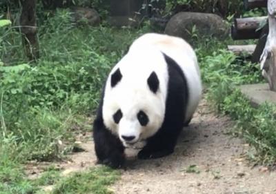 ***パンダの旦旦に会いに王子動物園へ&灘~甲南山手パン屋巡り***