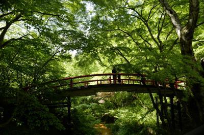 伊香保→水上へ~新緑と温泉に癒された、気ままな一人旅~