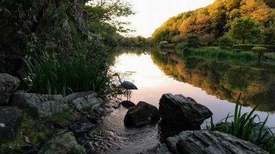 地元散策①  里見公園とじゅん菜池