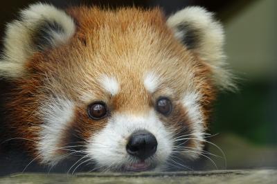 釧路市動物園  やっとこれた北海道遠征!! 出産の可能性のあるアスナロちゃんは非展示でしたが、元気なみんなに会えて感無量です