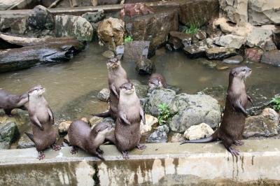 智光山公園こども動物園も開園!~わちゃわちゃコツメカワウソ8頭となつかしい仲間たちとはじめましてエミューの赤ちゃん