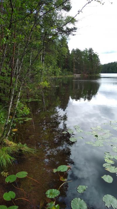 白夜のフィンランド 女子旅 3 ベリーベリーベリー ヌークシオ国立公園