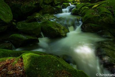 新緑の王滝渓谷