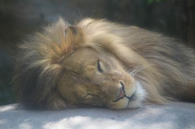 夏の旭山動物園散策