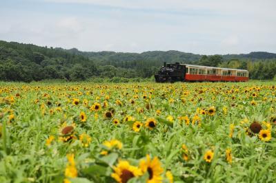 夏の小湊鉄道 夜トロと石神のお花畑