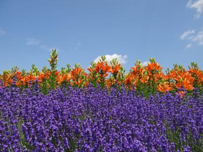 花の札幌 百合が原公園 7月上旬