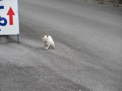 猫探し【沖縄・与那国島(Yonaguni Is.)フェリーよなくに編】