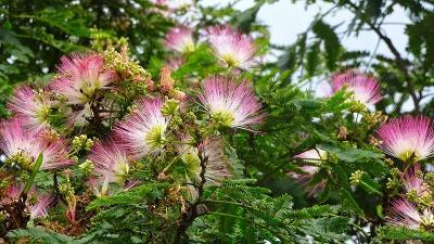 梅雨の合間に、昆陽南公園に咲く花を見に行きました その4完。