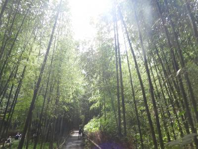 静かな京都へ