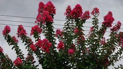 続けて、笹原公園に咲くお花を見せて貰いに行きました その2。