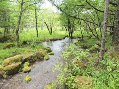 夏の信州旅No.3 女神のそらテラスから眺める女神湖 緑が美しい御泉水自然園 たてしな自由農園 原村店でランチ&ショッピング