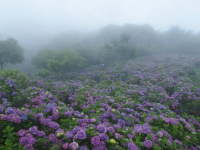 母と歩く梅雨の秩父路 ③ 雨に霞む美の山は花の山 紫陽花あざやかに色づく