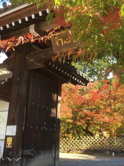 秋の京都、紅葉の旅 ANAプレミアムクラス(国際線使用機材)で
