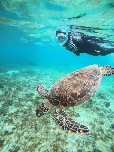 ウミガメと泳ぐ奄美大島 女子ひとり旅3
