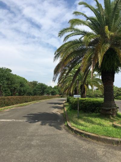 磯ノ浦付近散歩