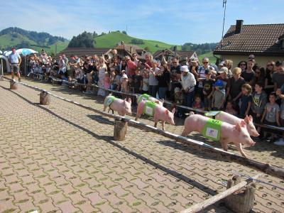 ②たくさん牛を見よう!子豚レースに大興奮!Urnasch*Alpabzug*2019/9