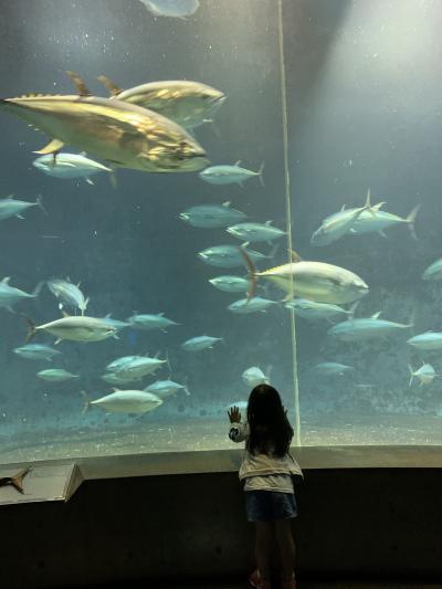 入場制限中の東京葛西臨海水族園