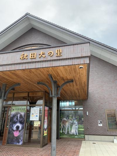 大館で秋田犬と会う。
