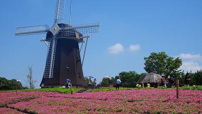 久し振りの花博記念公園 咲くやこの花館と風車の丘 その7。