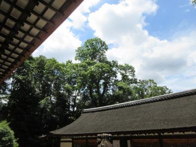 県外移動の自粛が解け 世界遺産・宇治上神社で新型コロナ終息を祈願しました