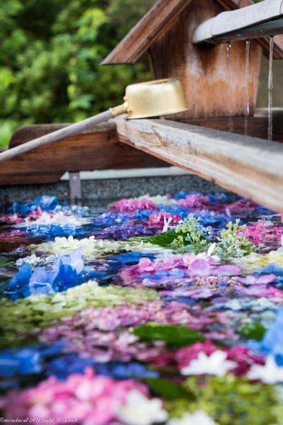 彩りが素晴らしい花手水の豊景神社
