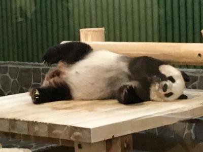 2020パンダ鑑賞記録☆またタンタンちゃんに会いたくて☆王子動物園