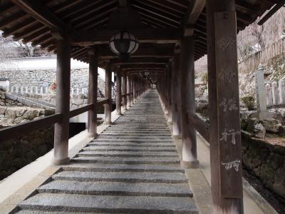 2019年冬 京都と奈良のひとり旅 三日目【3】長谷寺 一周廻ったら2時間弱、冬咲の牡丹