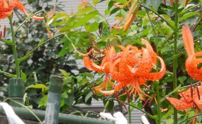 少雨の中、ふじみ野市西鶴ケ岡地区を散策しました