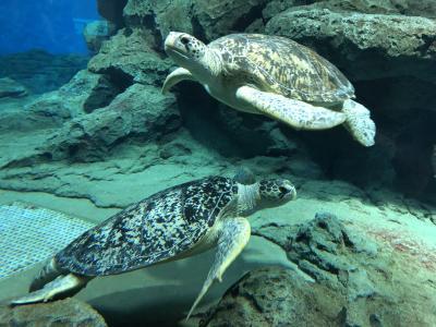 3度目の名古屋港水族館 たくさんのウミガメが目の前に来てくれて大満足(2020年7月)