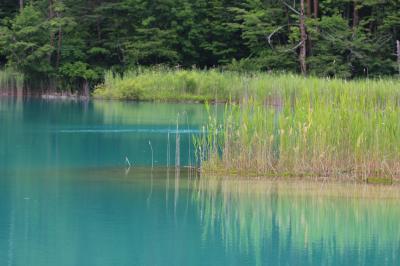 裏磐梯 歩いたあとは温泉でぬくぬく①五色沼