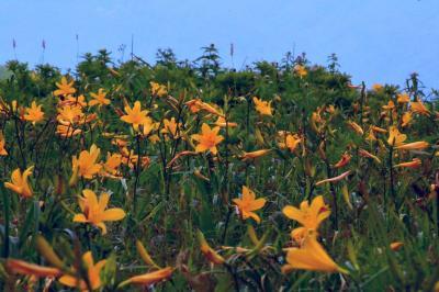 黄色の世界を求めて車山・霧ヶ峰へ【ニッコウキスゲ】