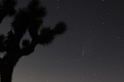 ネオワイズ彗星を見にジョシュアツリー国立公園へ