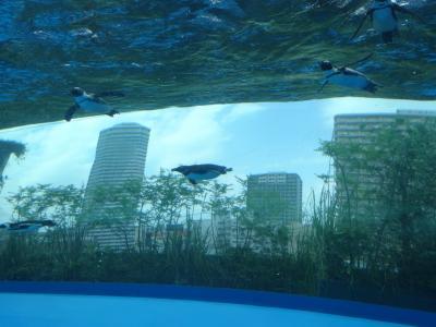 サンシャイン水族館とマーチエキュート神田万世橋で夢かなえる【親子で東京往復記6月編その2】