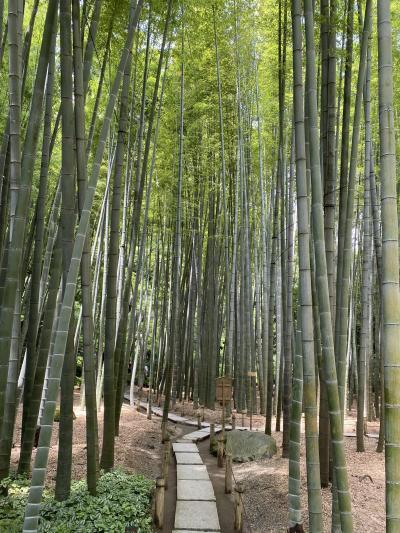 ぶらり散歩 鎌倉~報国寺 2020.7