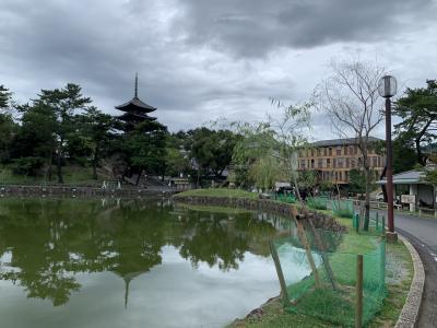 数十年ぶりの奈良!その1 猿沢池畔のホテルに泊まって定番観光。東大寺、春日大社、ならまち