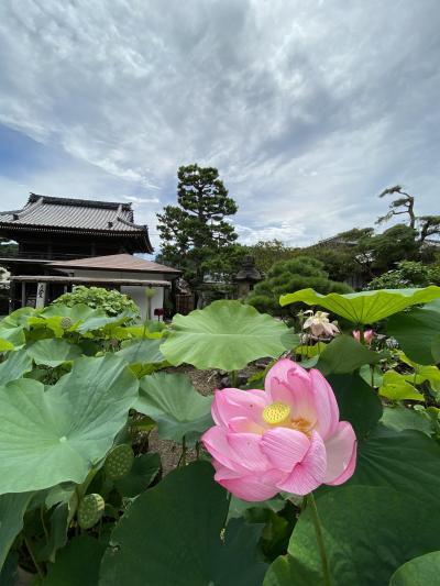 ぶらり散歩 鎌倉~妙本寺~五所神社 2020.7