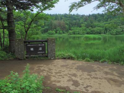 あこがれの利尻島・礼文島へ(2)・・稚内からフェリーで利尻島~路線バスで姫沼へ