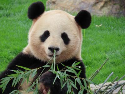 リベンジ和歌山(7)☆ジャイアントパンダとアドベンチャーワールド