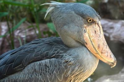 動物ずくめのシンガポールひとり旅 27 バードパーク 極彩色の鳥たちの部