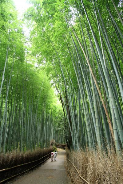 京都嵐山嵯峨野散策。 愛宕念仏寺、法輪寺、天龍寺、竹林の小径、嵐山トロッコ列車。