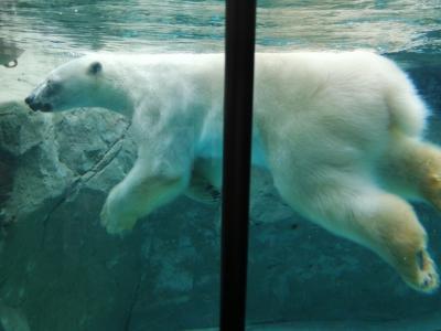 '20 夏の北海道旅行14 旭山動物園①(正門~あざらし館~ほっきょくぐま館)