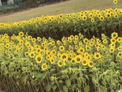 花を求めて 里見公園 じゅんさい池緑地 堀之内貝塚 道の駅いちかわ