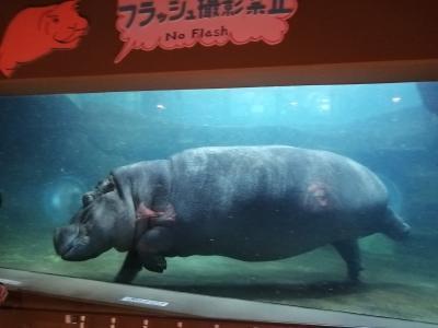 '20 夏の北海道旅行16 旭山動物園③(きりん舎・かば館)