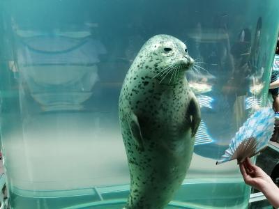 '20 夏の北海道旅行17 旭山動物園④(あざらし館~ほっきょくぐま館 再訪問)