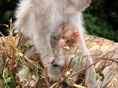 シャンシャンに会いたくて 予約制になった上野動物園へ!