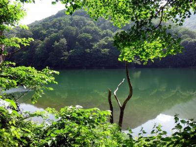 コロナより、長雨に祟られた、恒例夏の東北ドライブ旅行 2. 白神山地、十二湖