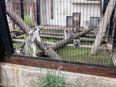 '20 夏の北海道旅行20 旭山動物園⑦(ちんぱんじーの森~くもざる・かぴばら館~サル舎~たながざる館~おらんうーたん館)