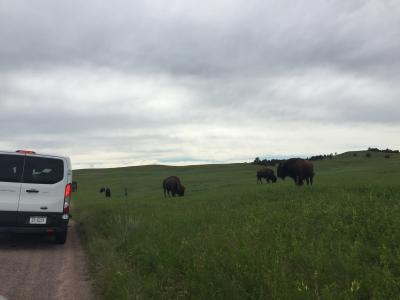 サウスダコタ州 ウィンド ケイブ国立公園 ー バッファローたちに遭遇