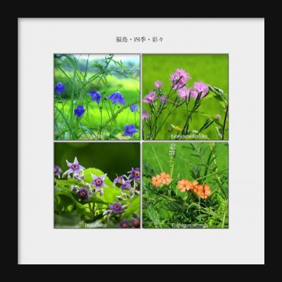 ◆福島・四季・彩々Part,91 『名残り梅雨の候』